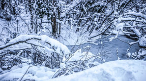 Plitvice lakes snowy winter Royalty Free Stock Photography