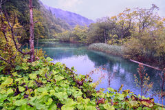 Plitvice landskap för paradis för vatten för sjöturkos Arkivfoton