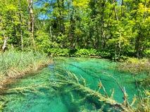 Plitvice nationalpark Royaltyfri Fotografi