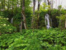 Plitvice park in Croatia Stock Images