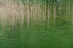 Plitvice. Sedges Stock Photography