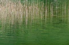 Plitvice. Sedges. Blades of sedges in Tranquil Calm Lake. Plitvice, Croatia Stock Photography