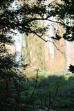 Plitvice Seen Lizenzfreies Stockbild