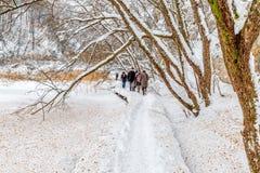 Plitvice snöig vinter för sjöar Arkivfoto