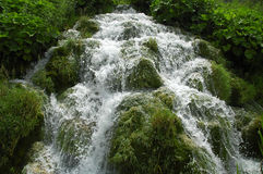 Plitvice waterfalls. Beautiful waterfall currents. Surrounded by green fresh vegetation Royalty Free Stock Photography