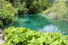 Plitvicka湖-植物名 图库摄影