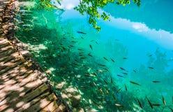 Plitvicka jezera Obraz Royalty Free