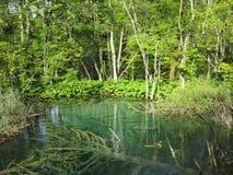 Plitvicka jezerakroat sjö Arkivbild