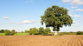 Plöjd jordbruksmark Arkivbilder