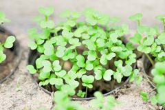 Plnt in flowerpot. Small plant in the flowerpot Stock Photo