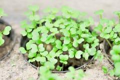 Plnt w flowerpot Zdjęcie Stock