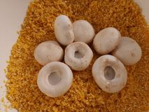 Plocka svamp champignonen på krossat havrekorn arkivfoto