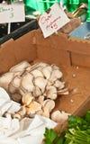 plocka svamp den organiska ostronen Royaltyfria Bilder