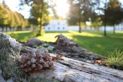 Plocka svamp familjen på autumnÂs dag Arkivfoto