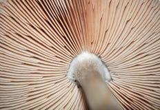 plocka svamp giftet Arkivbild