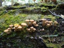 Plocka svamp höst Royaltyfri Foto