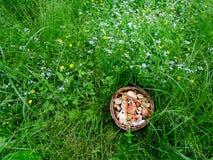 Plocka svamp i Tjeckien Royaltyfri Fotografi