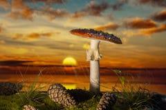 Plocka svamp i trät på solnedgången i regnet Royaltyfri Fotografi