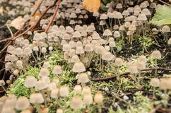 plocka svamp litet Arkivbilder