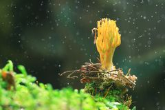 plocka svamp litet Arkivbild