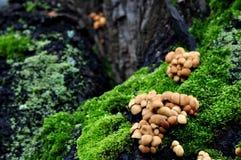 plocka svamp mycket litet Royaltyfria Bilder
