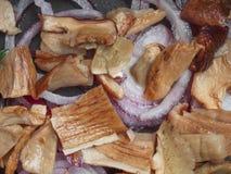 plocka svamp porcinien Royaltyfri Fotografi