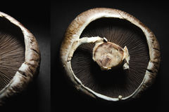 plocka svamp portobello Arkivbild
