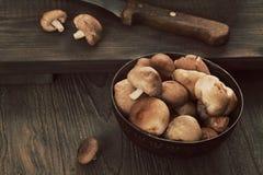 plocka svamp shiitaken Fotografering för Bildbyråer