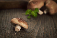 plocka svamp shiitaken Royaltyfria Bilder