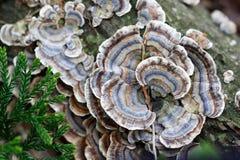 plocka svamp svankalkonen Royaltyfria Bilder