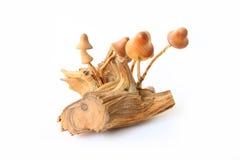 plocka svamp trä Royaltyfria Bilder