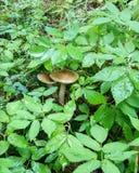 plocka svamp trä Royaltyfri Fotografi