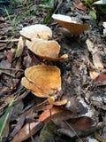 plocka svamp trä Arkivbild