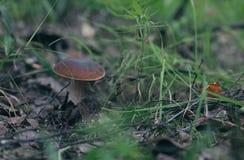 plocka svamp trän Royaltyfri Bild