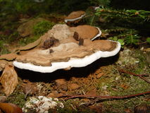 plocka svamp treen royaltyfri bild