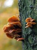 plocka svamp treen Arkivbild