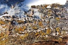 plocka svamp trees Fotografering för Bildbyråer