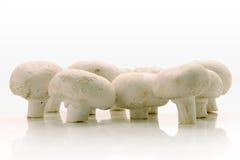 plocka svamp white Arkivfoton