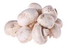 plocka svamp white Fotografering för Bildbyråer