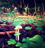 plocka svamp white Royaltyfri Foto