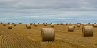 Plockning av Hay Fields Royaltyfri Fotografi