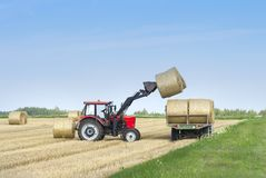 Plockning av jordbruks- maskineri Traktoren laddar baler av hö på maskinen, når den har skördat på ett vetefält arkivfoton