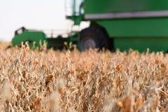 Plockning av sojabönafältet arkivfoton
