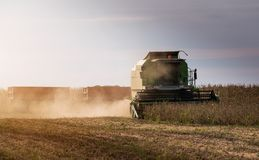 Plockning av sojabönafältet med sammanslutningen Arkivbild