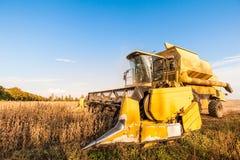 Plockning av sojabönafältet med skördetröskan royaltyfria foton