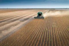 Plockning av sojabönan Arkivbilder
