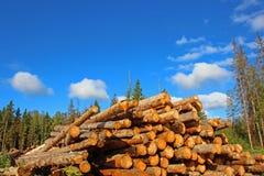 Plockning av trä i Ryssland Arkivfoto