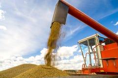 Plockning av vete Traktor- och sakkunnigplockningutrustning unga vuxen människa Arkivbild