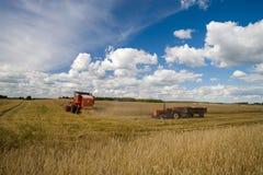 Plockning av vete Traktor- och sakkunnigplockningutrustning unga vuxen människa Arkivfoton
