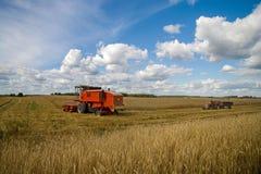 Plockning av vete Traktor- och sakkunnigplockningutrustning unga vuxen människa Arkivfoto